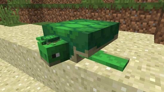 我的世界怎么养海龟 乌龟蛋孵化方法介绍